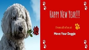 What New Years Resolutions Have You Made for You and Your Pets?