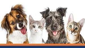 National Adopt a Shelter Pet Day – April 30th, 2019