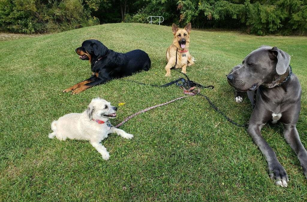 Dog Training Series- Tip# 8- Learning from Others