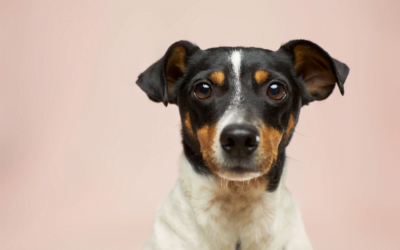 What Vaccines Does My Puppy Need?