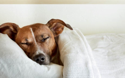 Should I co-sleep with my dog?