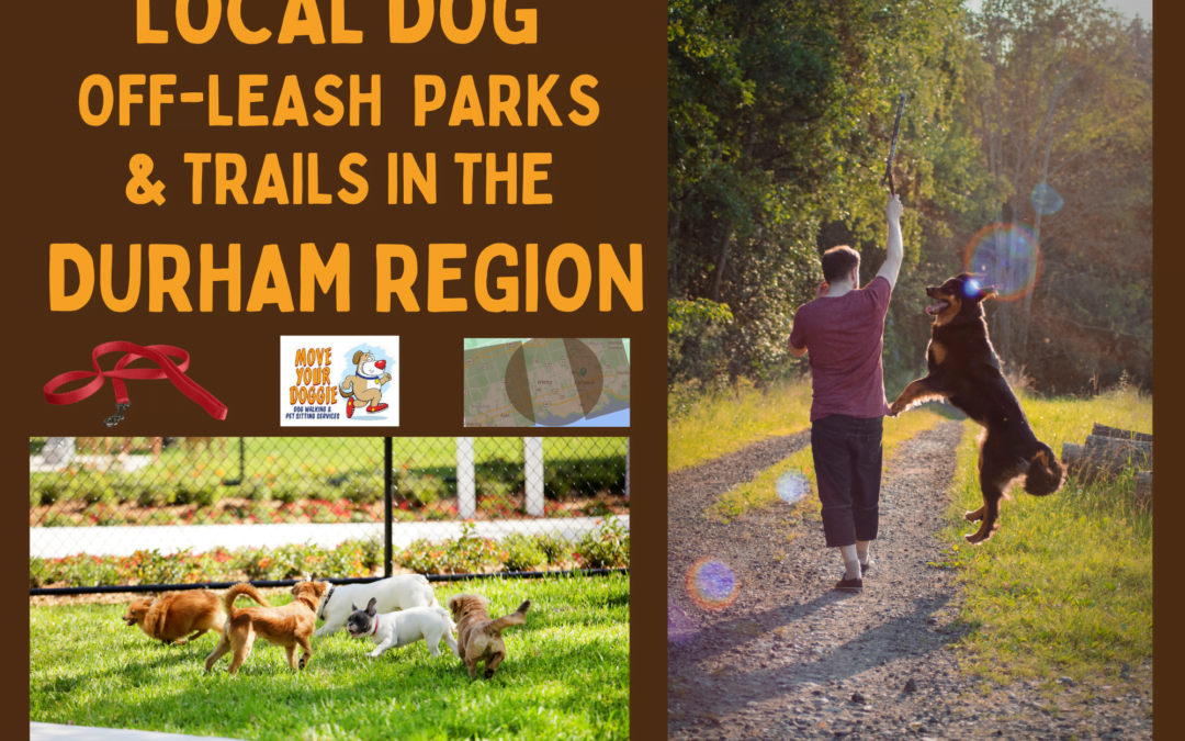 Local Dog Off-Leash Parks & Trails in the Durham Region