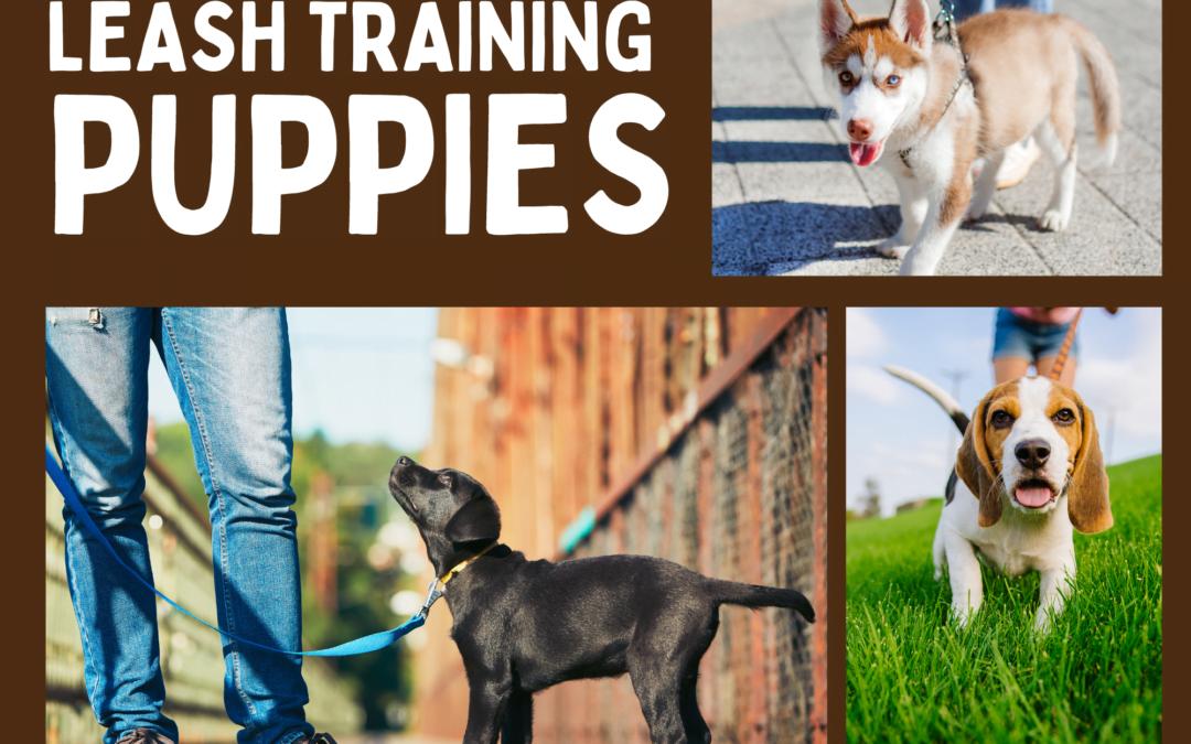 Leash Training – Puppies
