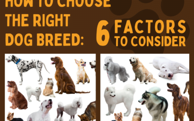 How to Choose the Right Dog Breed: 6 Factors to Consider