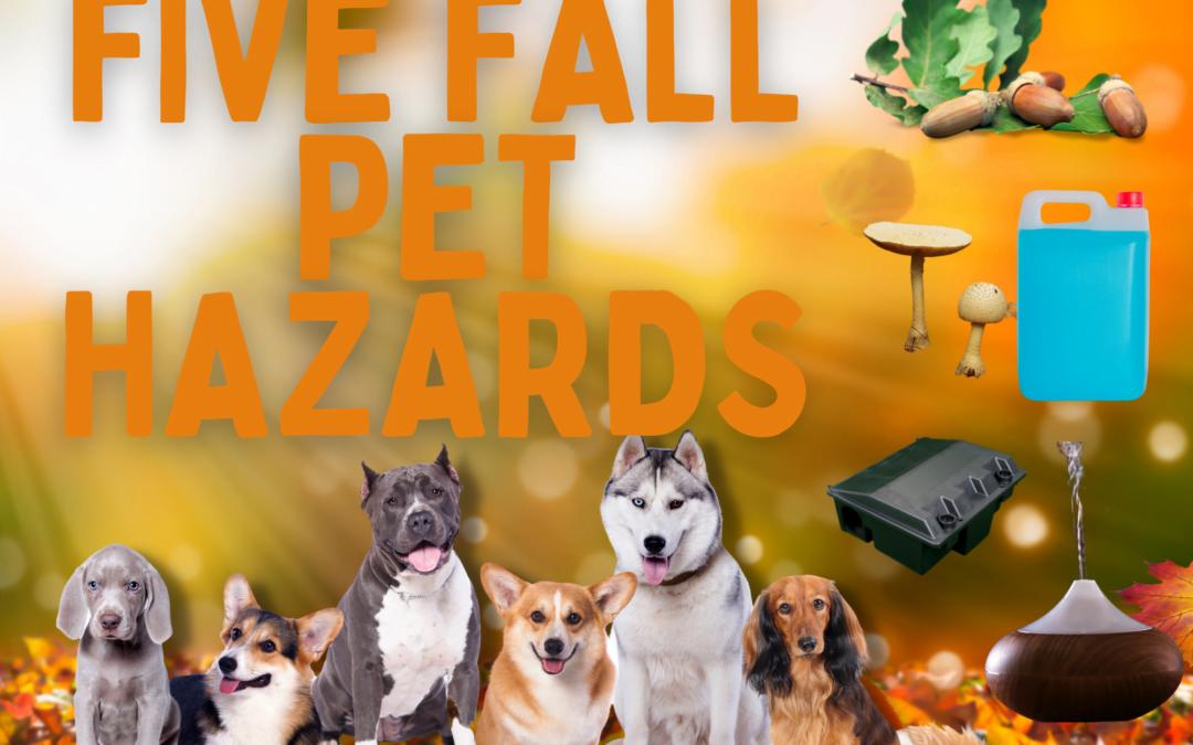 Five Fall Pet Hazards