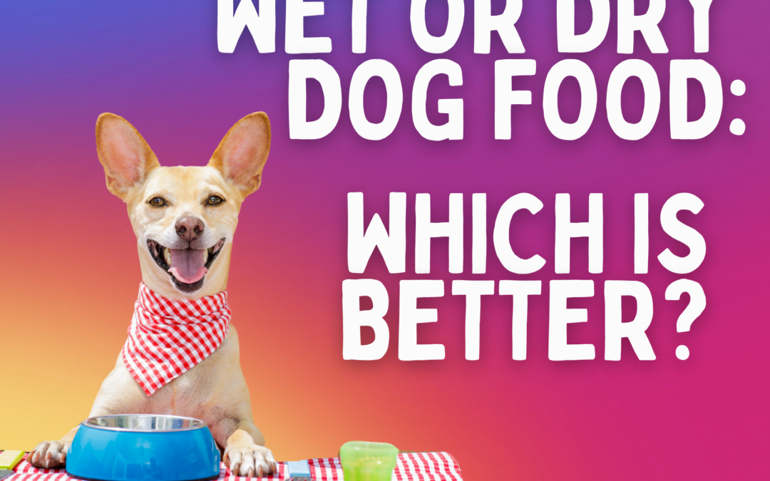 Wet or Dry Dog Food: Which is Better?